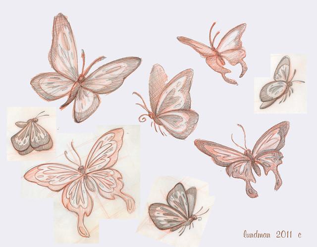 Lundman_butterflystudies001