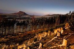 Glowing stumps (trewerynj) Tags: trees canon landscape outdoors countryside scenic roseberrytopping wondersofnature