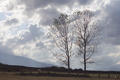 Campo del Castilla. (elojeador) Tags: lamo paisaje campo nube luz cerca pasto hierba len elojeador