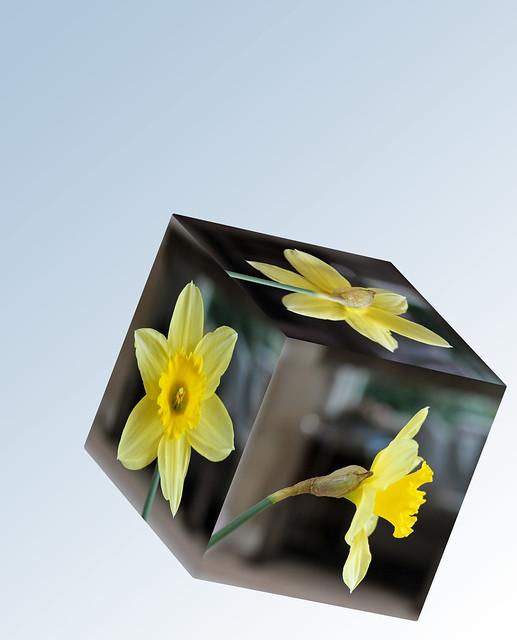 Drie dobbel lente