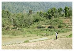 plan b-016 (mavicbuada) Tags: philippines farmer launion ricefields pugo