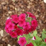 Wildflower_Center_107 thumbnail