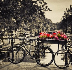 """There is no distance on this earth as far away as yesterday."" (Violet Kashi) Tags: pink flowers red summer holland texture netherlands amsterdam sepia canal kitsch bicycles geranium selectivecoloring"