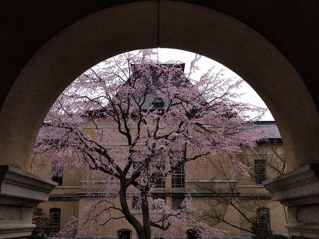 Cherry Blossoms looked from the frame
