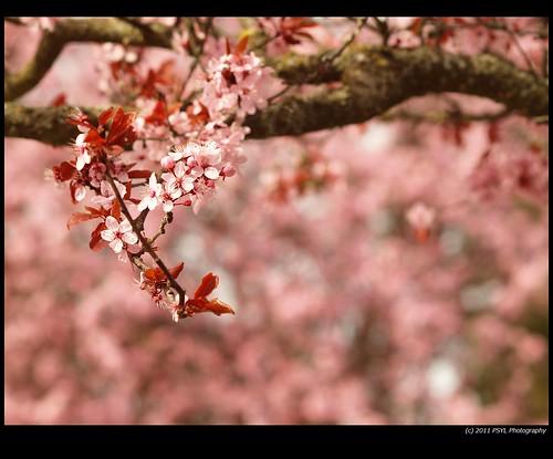 Blossom Slowly Fading Away
