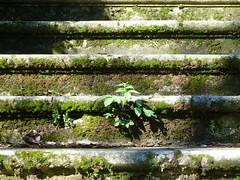 P1000144 (gzammarchi) Tags: italia natura campagna scala fiore paesaggio collina pianta monocrome camminata itinerario montecalderaro castelsanpietrobo
