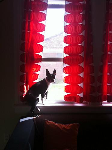 sunny windowseat