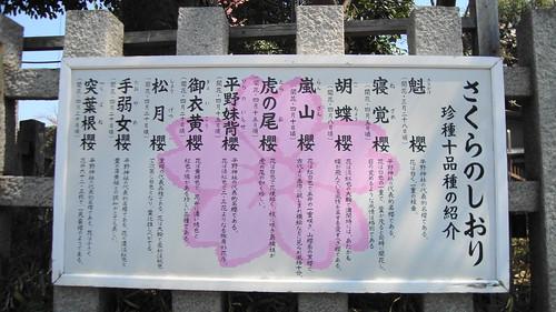2011/04 平野神社 #09