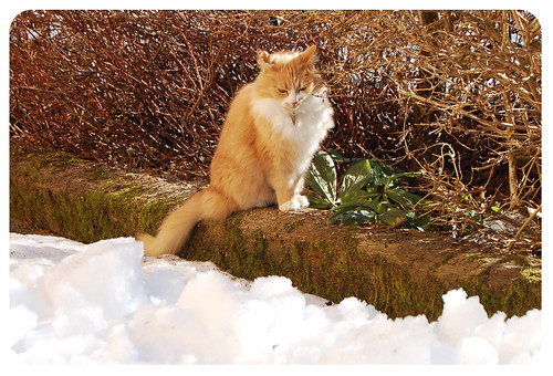 Avoiding snow