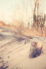 sandy (MarianneLoMonaco) Tags: canada beach nature grass 50mm spring dof wasaga bokeh sandy explore f18