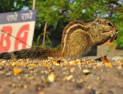 squirrel date #6 (parth joshi) Tags: dawn cycling child squirrell muses desolate mehrauli monumentsindelhi bhattimines adamkhanstomb