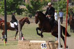 El Castaño, NL, -- (--ecantu-- / Eduardo Cantu) Tags: horse caballo photography photo foto fotografia castaño castano galope equitacion elcastaño ecantu eduardocantu elcastano