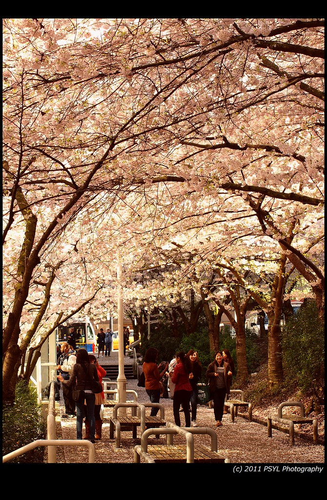 Walking Underneath Full Blossom
