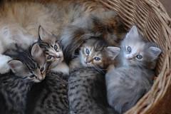 Abbiamo 40 giorni.... (virgiliomulas.) Tags: explore gatti gatta gattini piccoli grifis arianuova catnipaddicts virgiliocompany vg~catsgallery ariadibalcone ariadigiardino casediverse amantidigatti