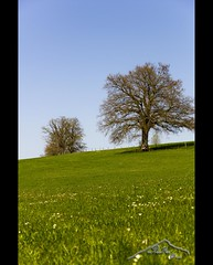 spring is in the air (mcPhotoArts) Tags: copyright tree nature germany landscape bayern deutschland bavaria countryside spring natur meadow wiese landschaft baum frhling murnau staffelsee uffing sigma1770mm2845dcmacro photoshopcs4 canoneos550d mcphotoarts2011 gapaland
