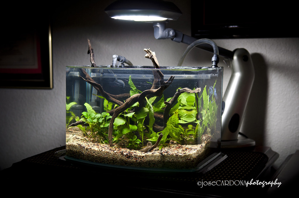 Update On The 3g Picotope Nano The Planted Tank Forum