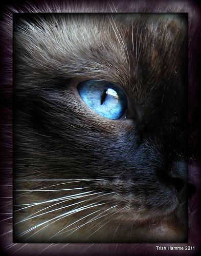 Blue eyes see Pretty Skies