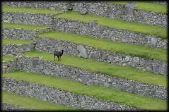 Detail of Machu Picchu