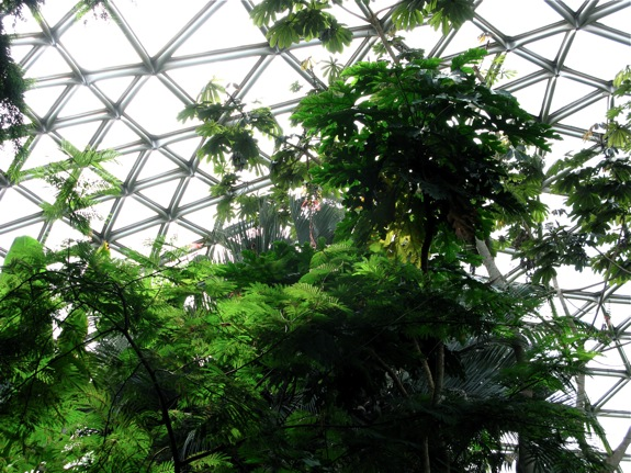 bloedel conservatory biodome vancouver 001