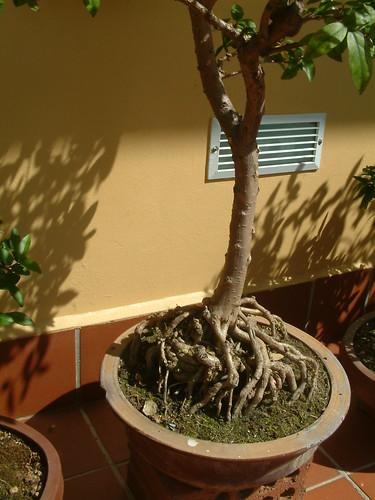 Protuding Roots 5634237484_c643d09daf