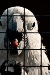 Olmense Zoo (Yamato Imaging) Tags: bird birds animal animals zoo photo foto photographer belgium belgie wildlife picture vogels belgi parrot pic photograph imaging jpg van yamato dieren dier antwerpen vogel kempen dierentuin papegaai fotograaf baelen yamatoimaging vanbaelen