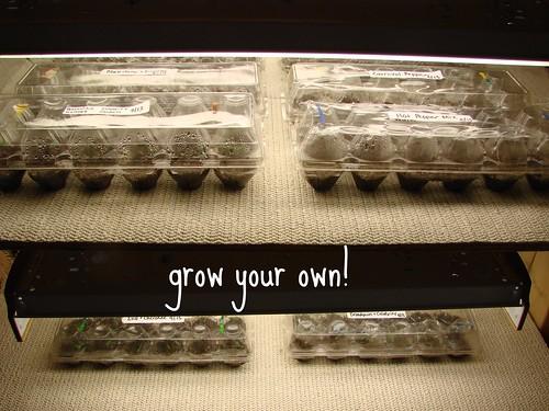DSC02845- grow