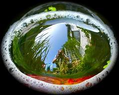 Self portrait in a bubble (Zenas M) Tags: selfportrait reflection reeds bristol pond waterlily garage trellis bubble april washing duckweed hemisphere washingline surfacetension 2011