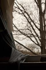 mother nature is let in. (stevenbley) Tags: urban ny newyork abandoned hotel ancient rust bokeh furniture decay exploring urbanexploration grime peelingpaint breeze decayed urbanexploring timewarp urbex sneak shagcarpeting canon50d guerillahistorian