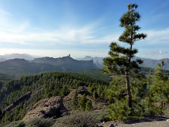 Gran Canaria - Pozo de las Nieves in der Winter-