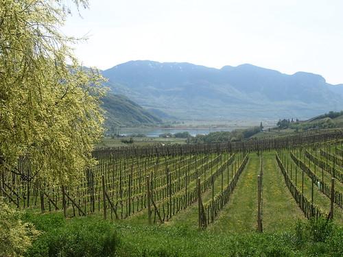 Blick über die Weingüter zum Kalterer See