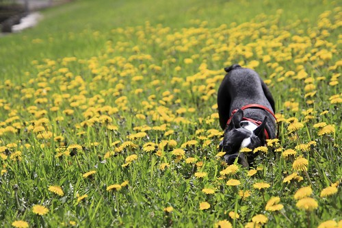 Sniffing Out Spring
