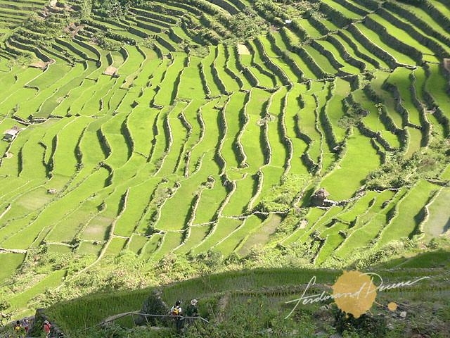 Batad Rice Terraces Patterns