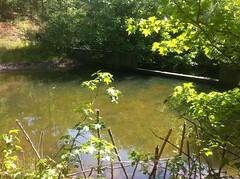 Silt Pond