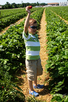 Nathan-holding-up-strawberry