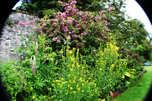 Weigela  and Everlasting Wallflower