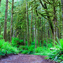 186. Devoured by Madness (Reprise) (prenetic) Tags: statepark park trees sky plants green nature leaves forest outdoors washington moss woods rocks earth path branches ground pebbles falls dirt trail waterfalls wallace lichen ferns twigs wallacefalls railroadgrade