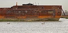 6) Three Honks and a Hulk (95wombat) Tags: newyork abandoned statenisland derelict boneyard vessels arthurkill corroding marinegraveyard