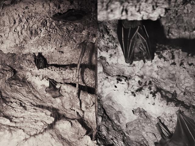MODS bats diptych