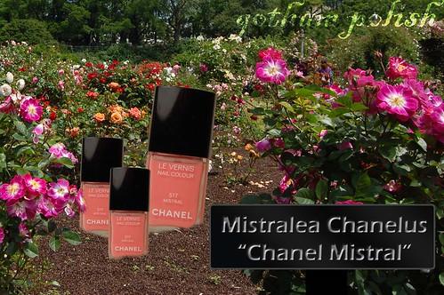Chanel Mistral Garden