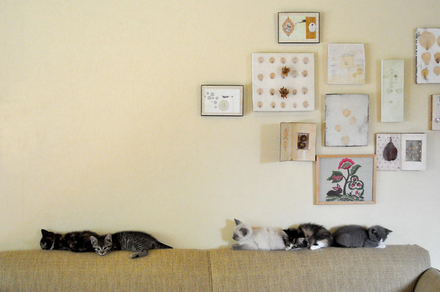Kittens_On_Couch