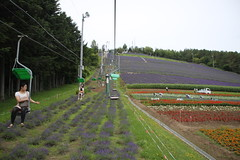 町營薰衣草農場