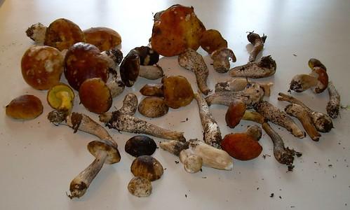 Mushroom-based pasta #4