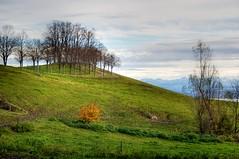 Meadows (Bephep2010) Tags: tree schweiz switzerland sony meadow wiese alpha 55 baum hdr neuenburg tonemapped photomatrix boudry neuchâtel slta55v