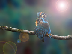 Heaven (lindasummerfield2) Tags: kingfisher brandonmarsh