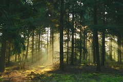 Sonnen-berfluteter Wald (izoll) Tags: izoll sony alpha77ii wald waldaufnahmen natur sonnenstrahlen lichtundschatten lichtstrahl naturaufnahmen bume