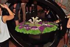 Interactive Floral Design - Kaleidoscope - Feature at the AG Hort Building (MJI Photos (Mary J. I.)) Tags: avsminnesota avsm africanviolet africanvioletsociety flowers statefair mn minnesota minnesotastatefair2016 flowershow blooming houseplants show plants plantshow twincitiesgesneriads gesneriads saintpaulia gesneriad statefairfriday dsc4210