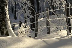 Coral (inaxiotejerina) Tags: nieve invierno navarra nafarroa negu elur urkiaga quintoreal kintoa