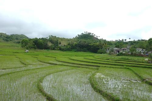 Negros-San Carlos-Bacolod (71)