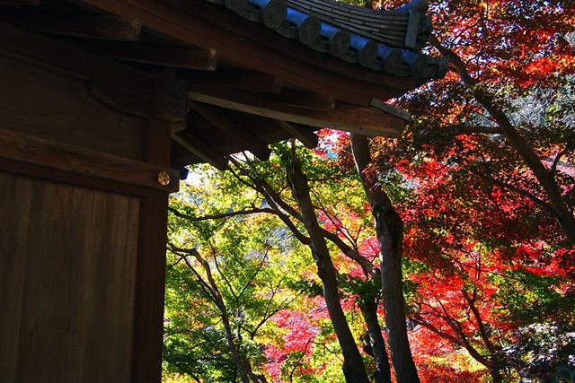 20101119_113034_長谷寺_大黒堂