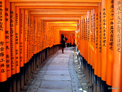 Thousands of Torii - Koyo, Japan